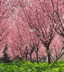 """3月 仙桃成全国""""最美""""的地方"""