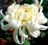初冬里的花卉