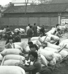 還記得嗎?當年在農村交跟著父親去交公糧!