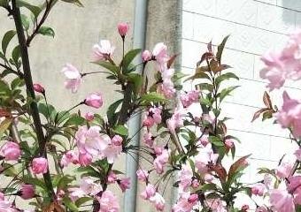 解封后的春光更明媚,且行且珍惜来之小易的