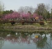 2020沔阳公园之春