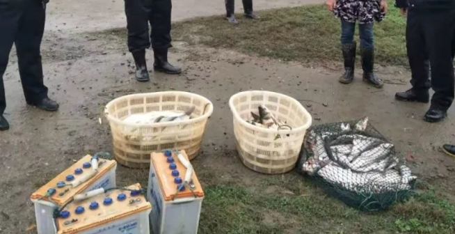 仙桃又有3名电鱼者被抓 鱤鱼黑鱼等240斤