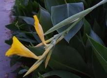 仙苑仙境美圖幾張