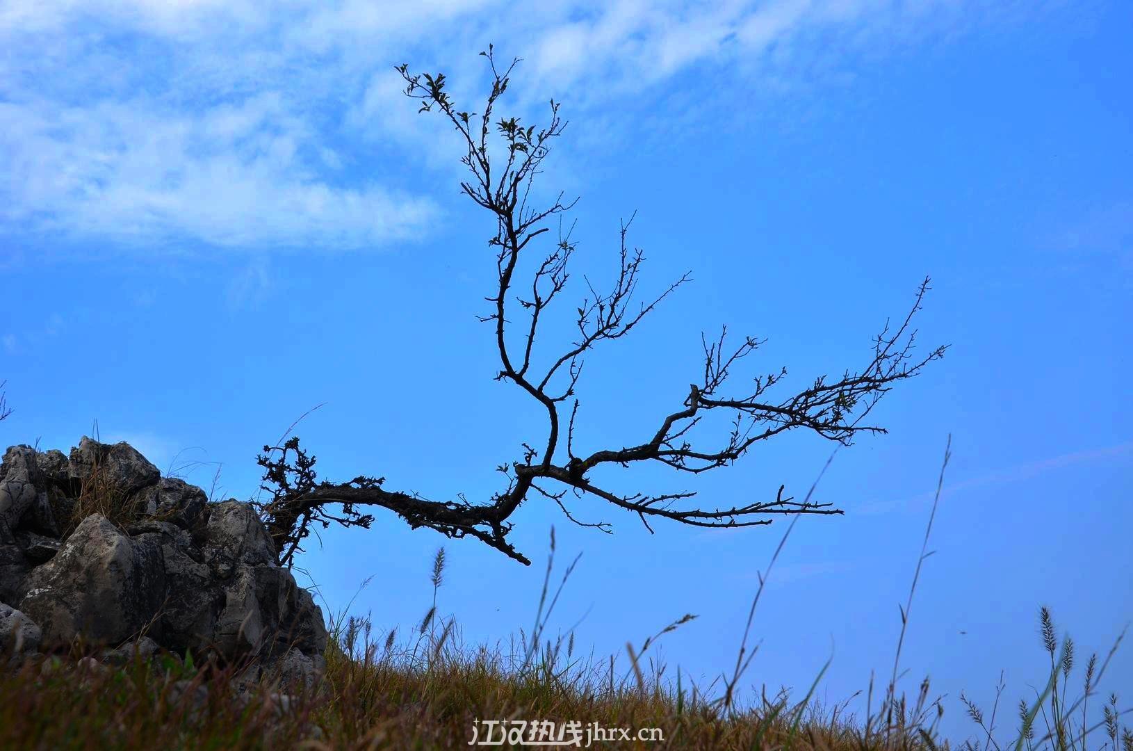盆景,有木有