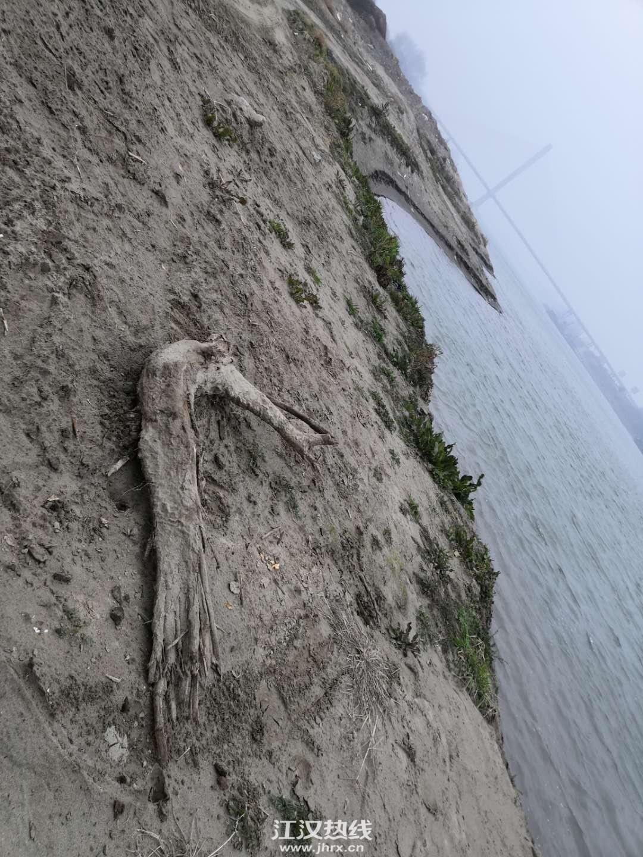 岸边的天然艺术品:木雕虾,就说想不想吧?