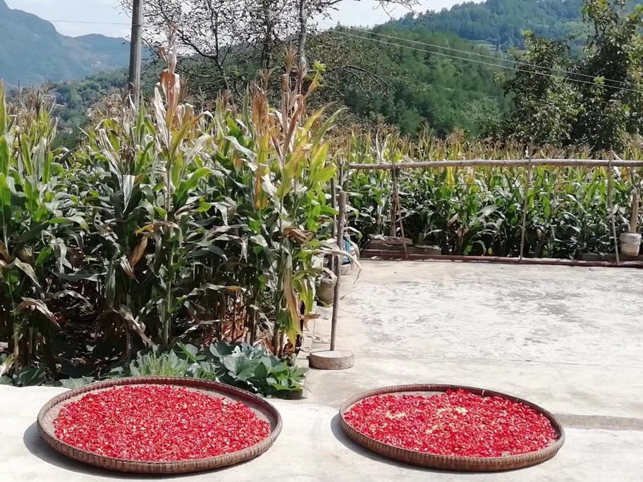 农家火红的辣椒,像征日子红红火火