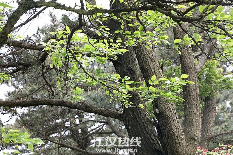 psc (3)_副本.jpg