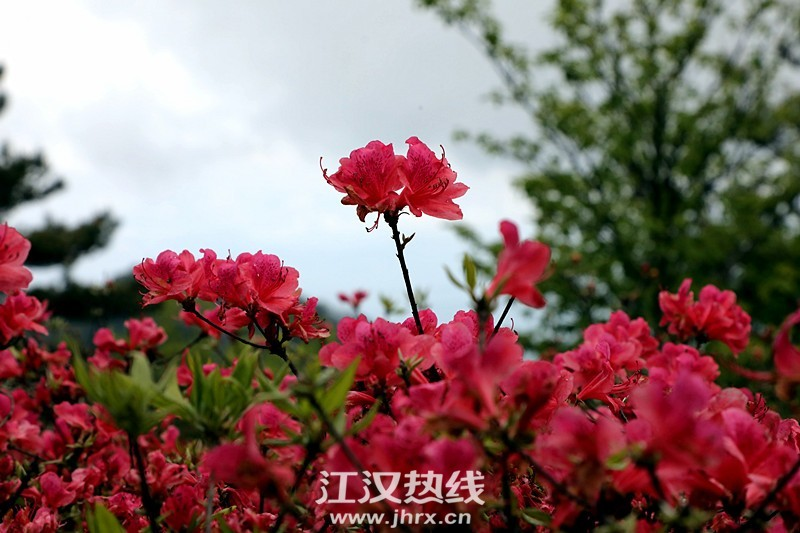 psc (47)_副本.jpg